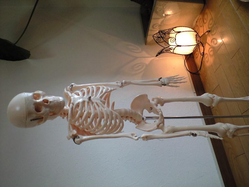 生理解剖学